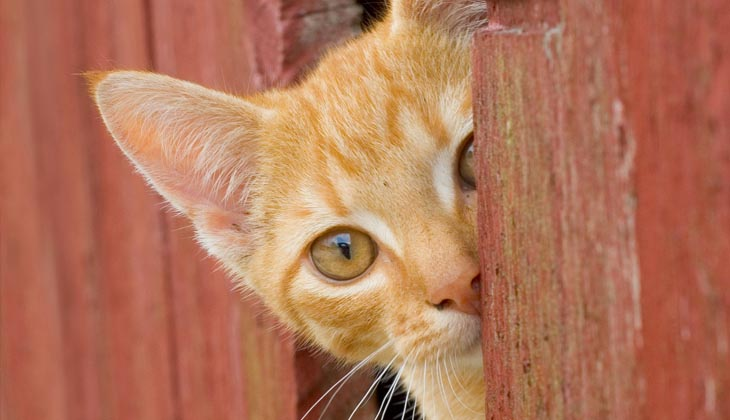 แมวแสนรู้