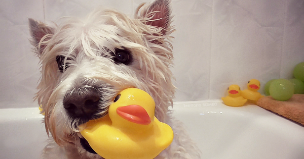 4 เคล็ดลับ สำหรับการอาบน้ำให้สนุกกับสุนัขของคุณ