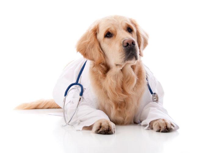 หากจะเลี้ยงลูกสุนัข ต้องพาไปตรวจสุขภาพหรือไม่?