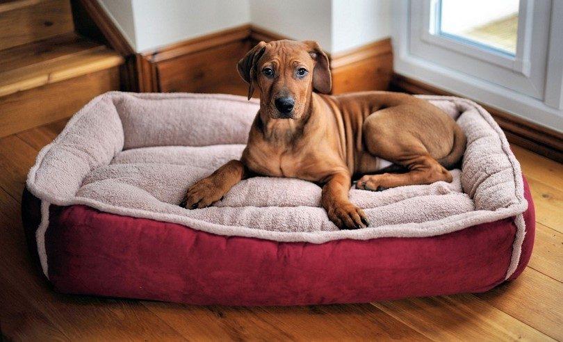 เตียงสำหรับสุนัข