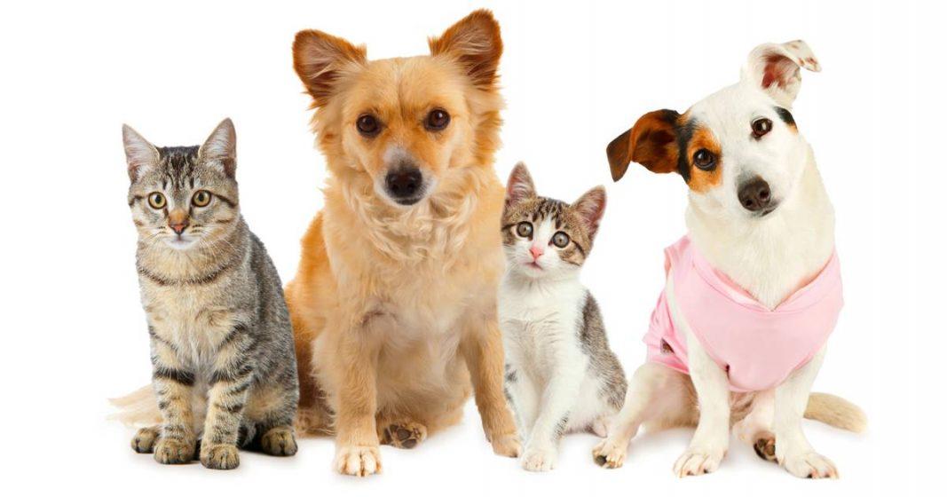 การเลือกซื้ออาหารให้กับสุนัขและแมว
