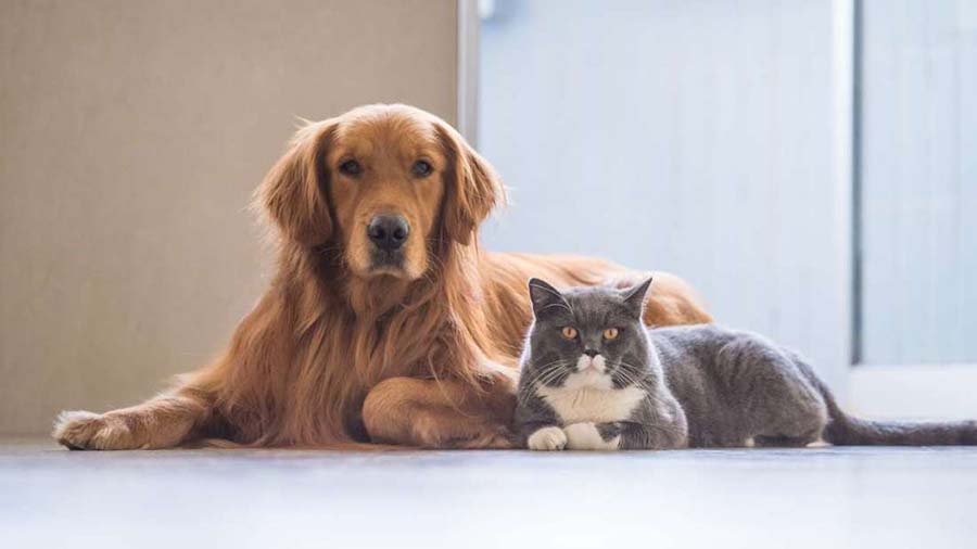 ความสุขสร้างได้ แค่เลี้ยงสุนัขกับแมว