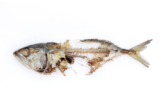 ก้างปลา ไม่ได้ดีต่อแมว