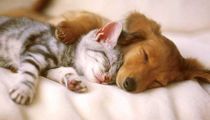 การมองเห็นและประสาทสัมผัสอื่น ๆ ของ สุนัข แมว เหมือนคนเราไหม