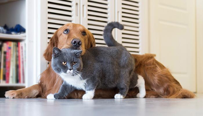 อยากรู้อายุสุนัข แมว เมื่อเทียบกับคน
