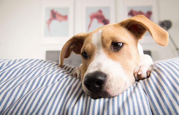คนรักสัตว์ควรรู้ โรคที่ สุนัข แมว ต่างก็เป็น
