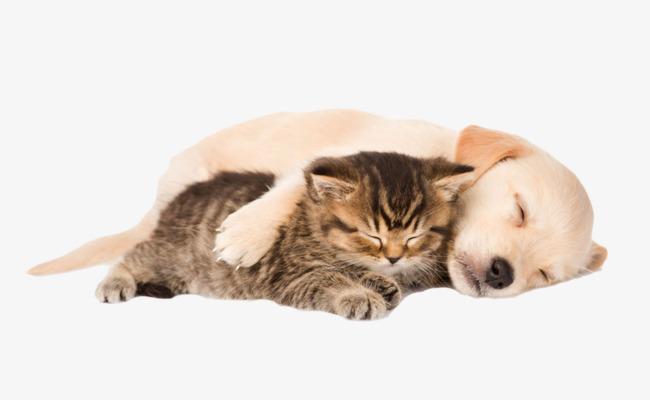 เคล็ดลับการผูกสัมพันธ์ ระหว่าน้องหมาและแมว