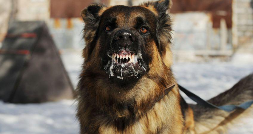 ชวนทำความรู้จักโรคพิษสุนัขบ้าในสุนัขและแมว