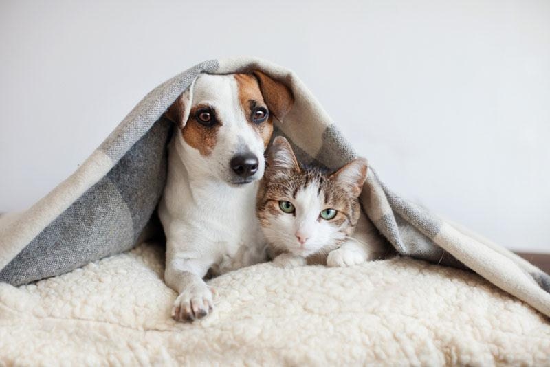 ข้อมูลที่น่าสนใจที่ผู้ต้องการเลี้ยงสุนัขและแมว