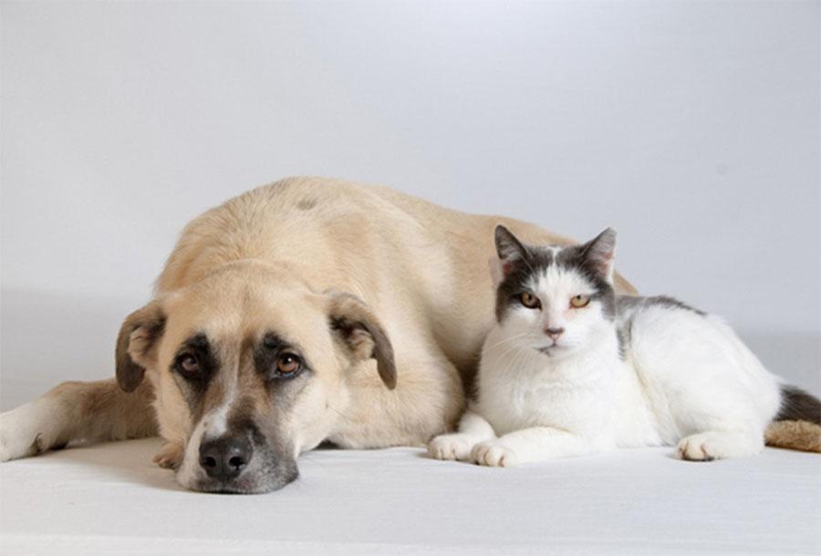 สิ่งที่ต้องรู้ หากคิดจะเลี้ยงสุนัขและแมว