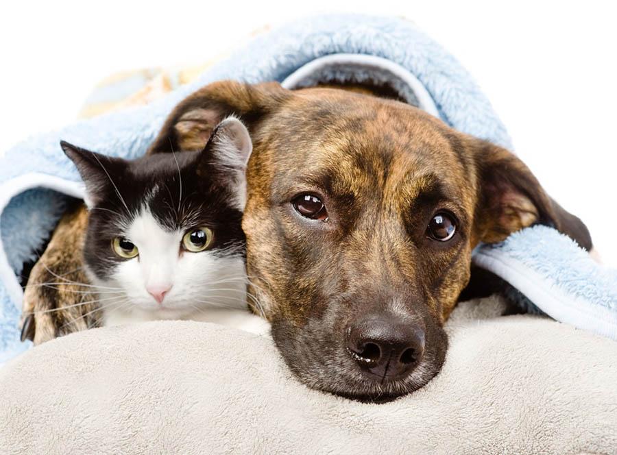 บุคลิกภาพของสุนัขแต่ละสายพันธุ์เหมือนกันไหม