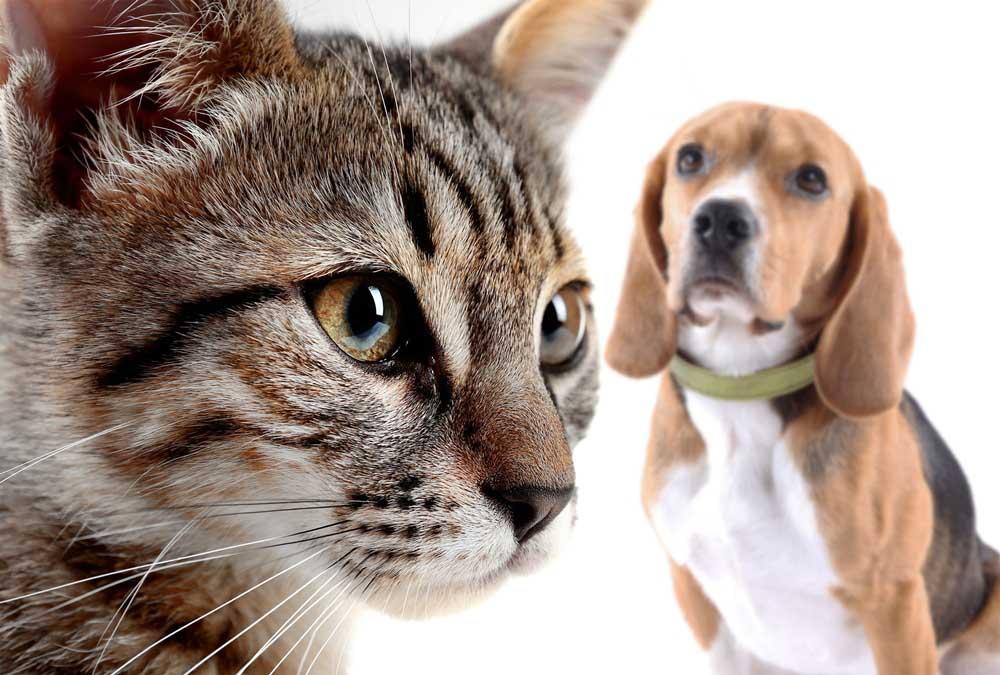 วิธีช่วยฝึกให้สุนัขและแมวเข้ากันได้ดี