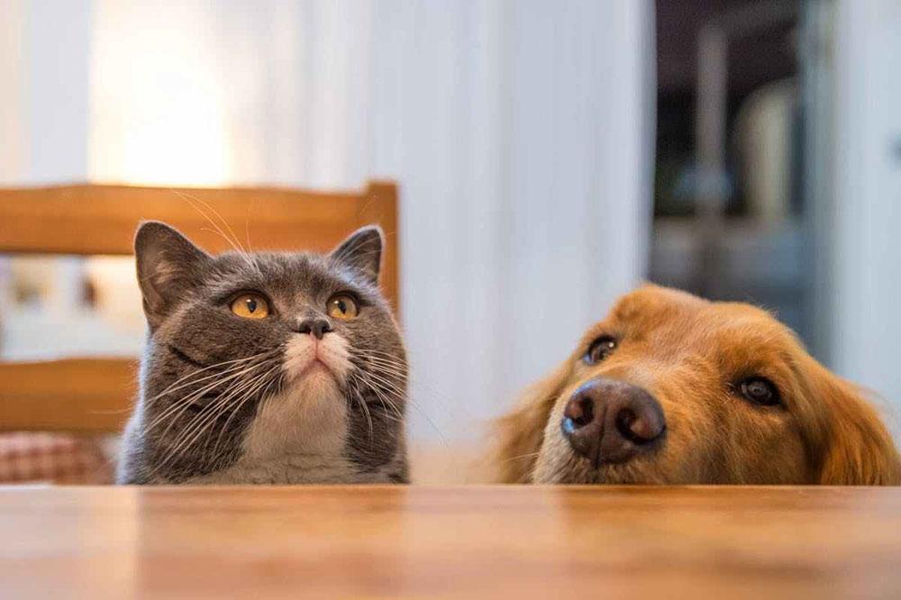 การให้อาหารแมวกับสุนัขแตกต่างกันไหม