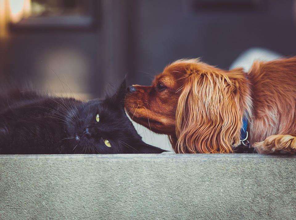 อาหารที่เหมาะสมสำหรับสุนัขและแมว