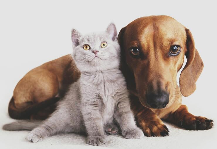 ภัยเสี่ยงของสุนัขและแมวในช่วงเทศกาล