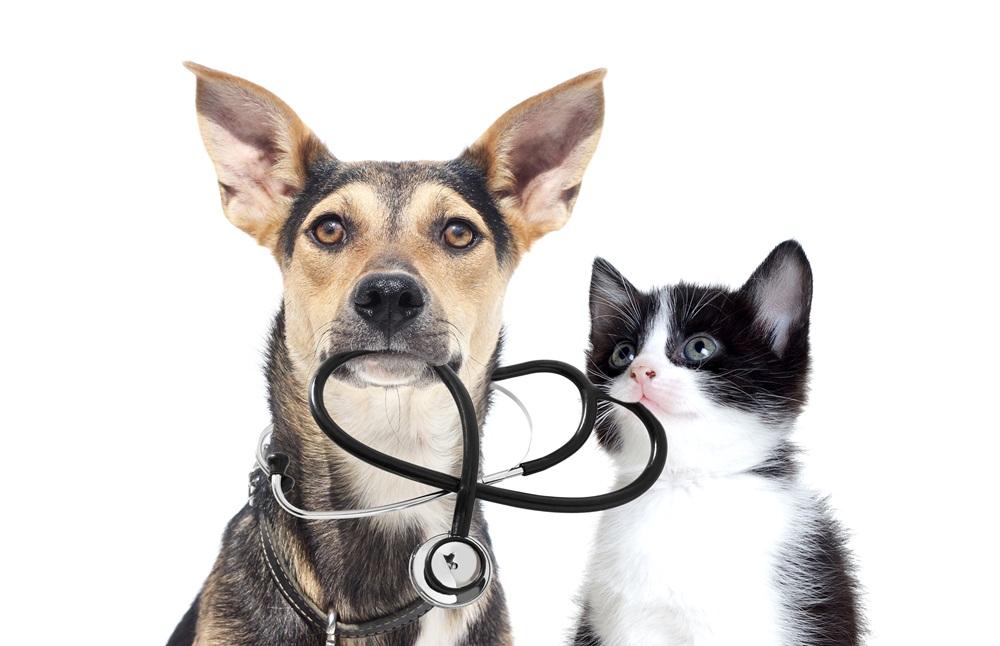 ทริคฝึกสุนัขกับแมวให้อยู่ด้วยกัน