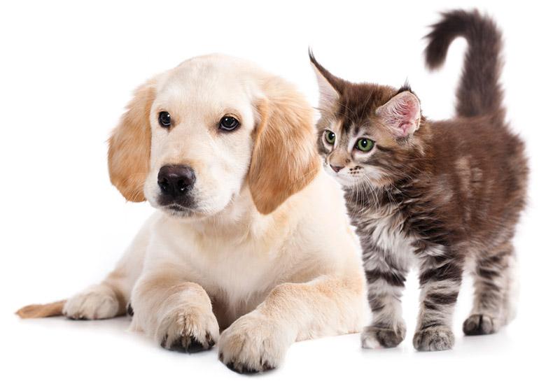 รวม 3 เคล็ดลับฝึกสุนัขกับแมวอย่างไรให้อยู่ด้วยกันได้