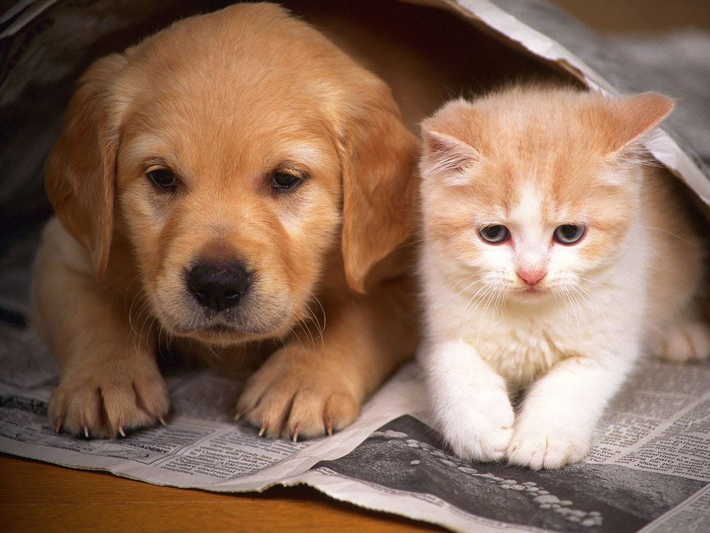 วิธีช่วยให้สุนัขกับแมวเข้ากันได้