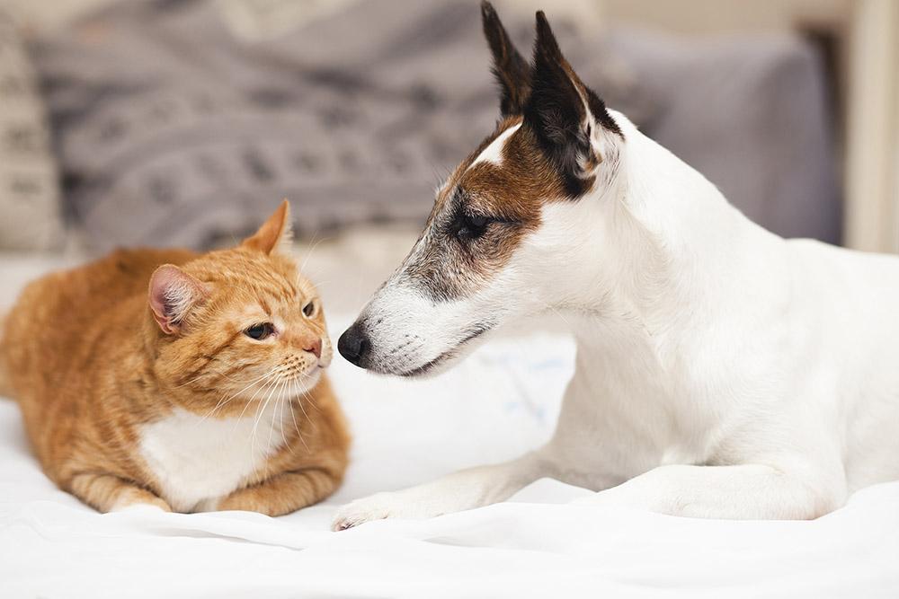 วิธีดูแลบ้านที่มีการเลี้ยงสุนัขและแมว