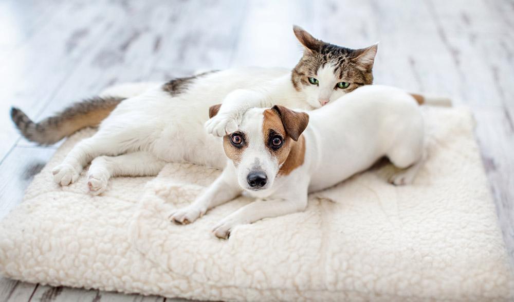 เริ่มต้นเลี้ยงสุนัขกับแมวอย่างไร ให้อยู่ด้วยกันได้
