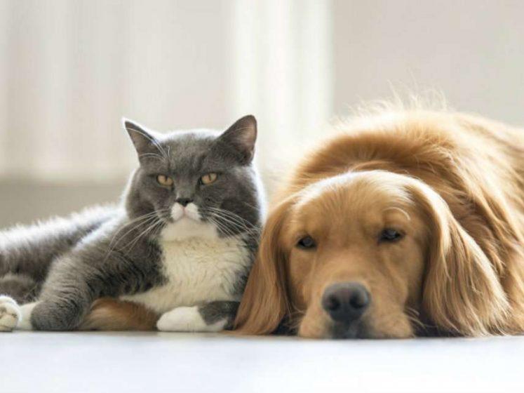 ไม่อยากมีปัญหากับเพื่อนบ้านด้วยสาเหตุจากสัตว์เลี้ยง ต้องทำแบบนี้